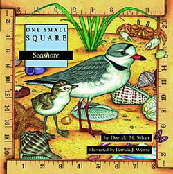 One Small Square Seashore
