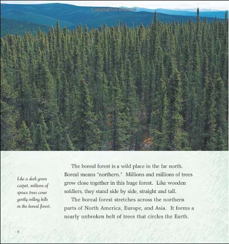 A Walk in the Boreal Forest
