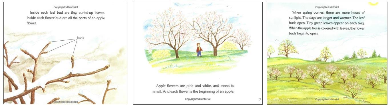 How-Do-Apples-Grow
