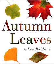 why autumn is the best season essay
